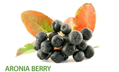 Aronia Berry cellular protection from  free radicals, strengthening of the  immune system